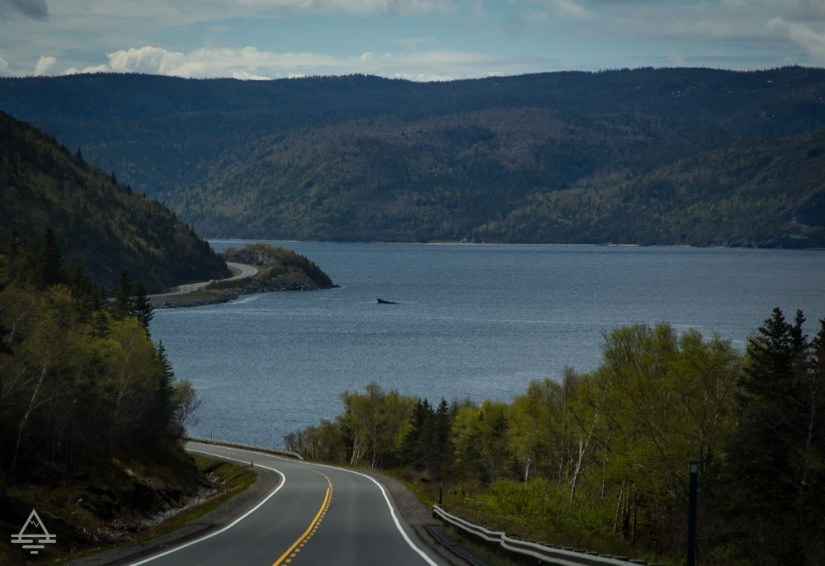 View of Road and inlet with whale