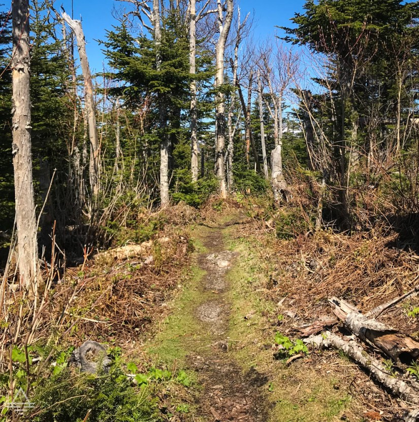 Gros Morne Berry Hill Trail-11