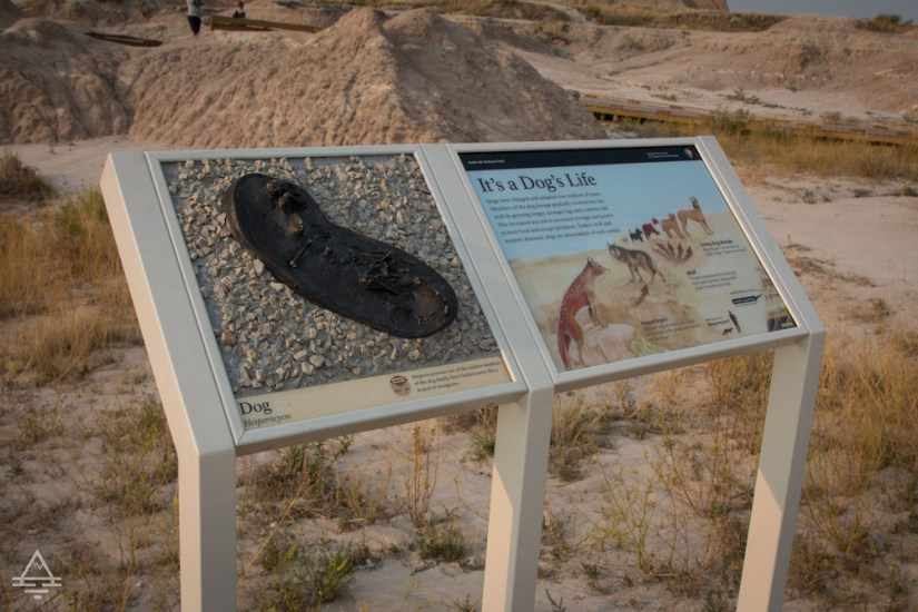 Replica of a prehistoric dog fossil on Fossil Exhibit Trail.