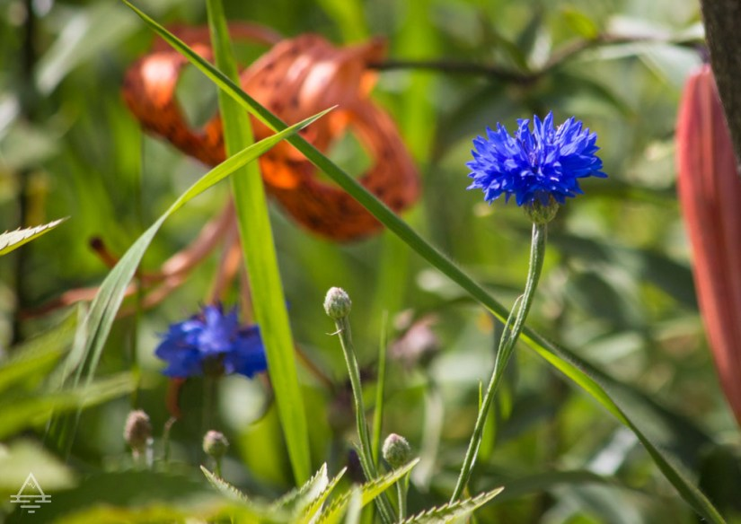 Ellsworth Rock Garden Blue and Orange Flowers