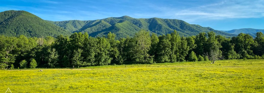 Green field in front of trees and mountains in Great Smoky Mountains National Park