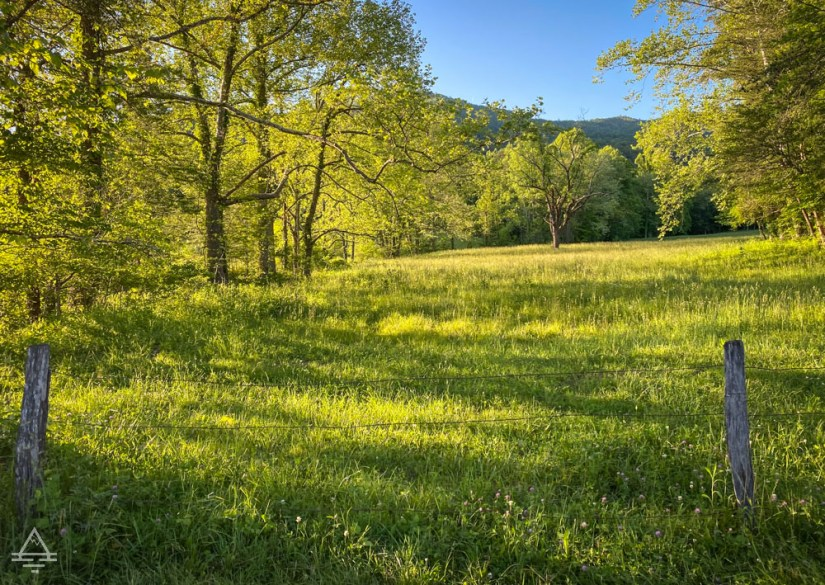 Trees surrounding a green field in Cades Cove
