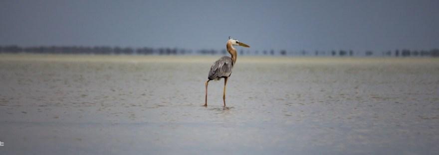 bird standing in water in the Everglades