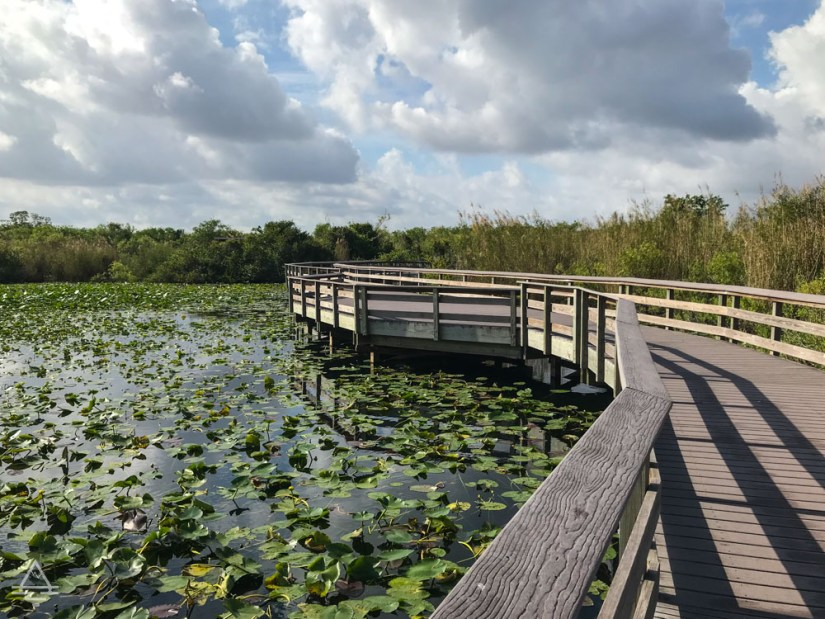 Boardwalk over water with lily pads in Everglades National Park on the Anhinga Trail