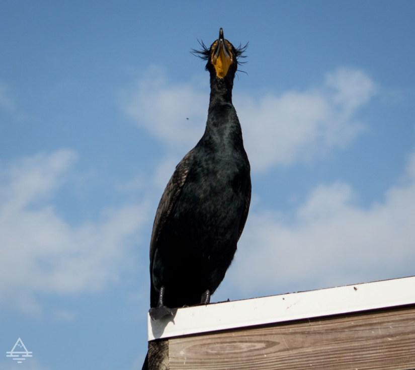 Large bird sitting on a roof on Everglades Anhinga Trail