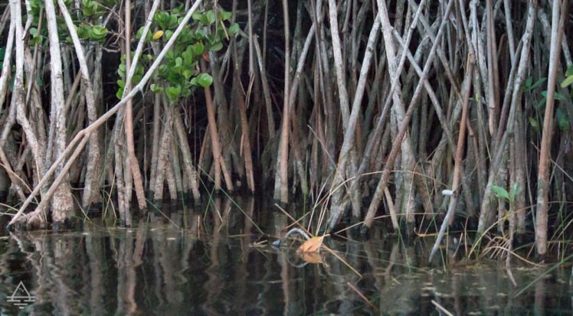 Water and mangroves