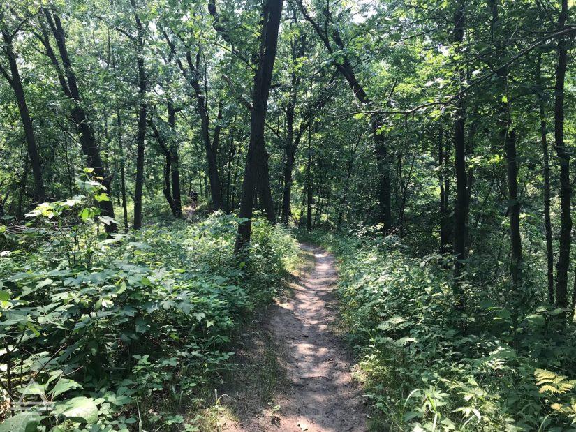 Long Lake Trail Through the Woods