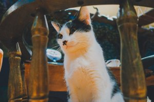 Lady Dinah's Cat Emporium - Where to go out in London