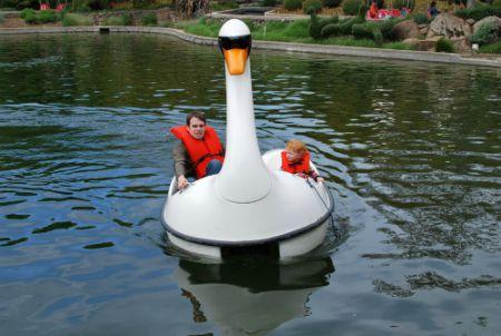 Gilroy Gardens - Swans
