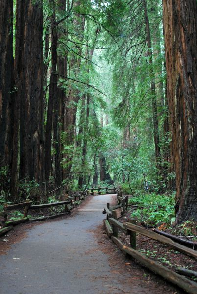 10 Kid-Friendly Day Trips Near San Francisco: Muir Woods