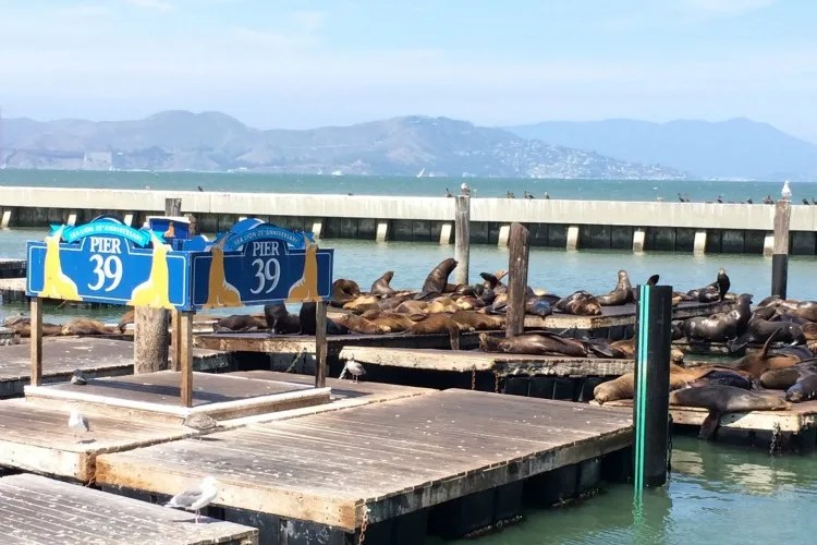 Fishermans Wharf San Francisco with Kids - Sea Lions