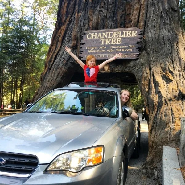 Top Fall Destinations in California - Leggett Chandelier Drive-Thru Tree