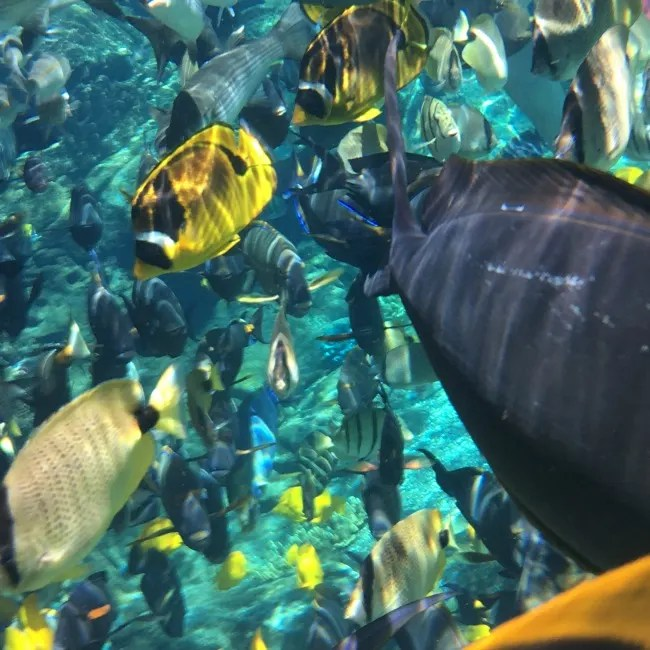 Disney Aulani Splurges - Rainbow Reef Underwater