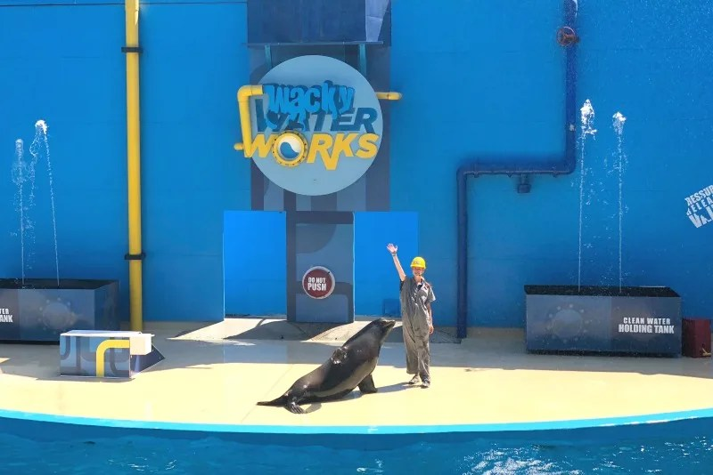 Six Flags Discovery Kingdom Tips - Sea Lion Show