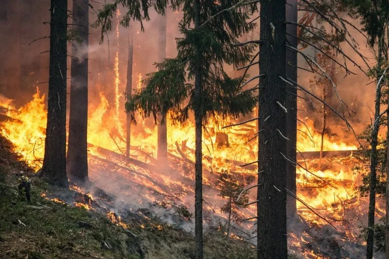 Travel Tips for Summer Wildfire Season