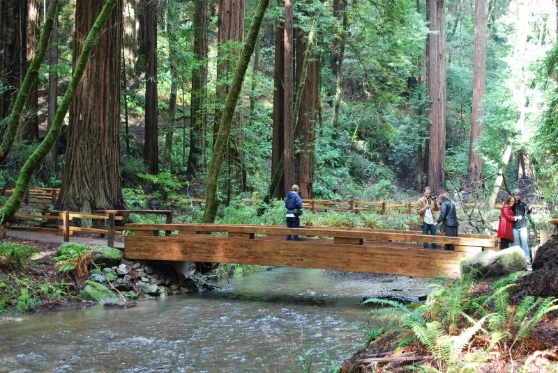 Muir Woods Tips - Bridge over Redwood Creek