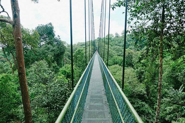 treetop-walk-macritchie-singapore-by-febry-fawzi-15