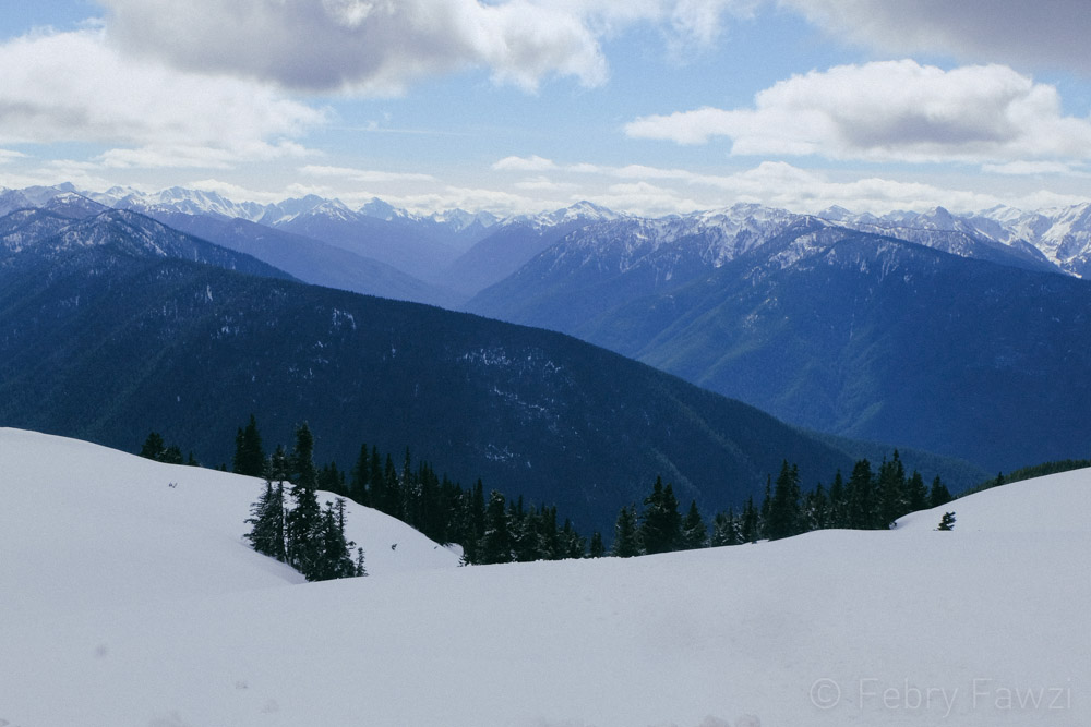 Hurricane Ridge Olympic National Park - by Febry Fawzi-10
