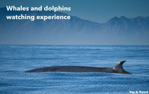 Tenerife, Playa de las Américas, things to do, whales and dolphins watching, Canary Islands, Spain, holidays