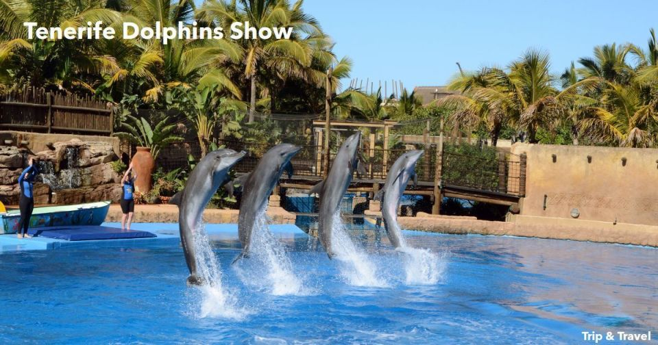 Tenerife Dolphins Show, hotels, hoteles, Spain, España, Canary, Islands, Islas Canarias, car renting, alquiler de coches, grupos organizados, tickets, reservations