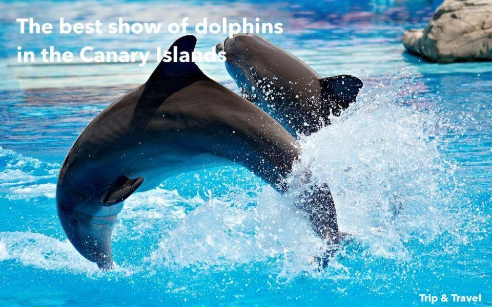 Tenerife Dolphins Show, Spain, España, Europa, Europe, hotels, hoteles, car renting, alquiler de coches, Canary Islands, Islas Canarias, grupos organizados, tickets