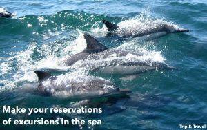 Tenerife Excursions Dolphins, reservations, hotels, reservas, hoteles, España, Spain, Canary Islands, Islas Canarias, organized groups, grupos organizados, delfines, ballenas