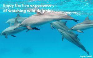 Playa de las Américas Dolphin Trip, reservations, Tenerife, Spain, Canary Islands, sea, whales watching, España, Islas Canarias, hotels, excursions, excursiones, alojamiento