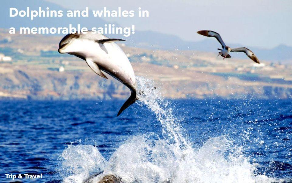 Playa de las Americas Whale Watching, hotels, trips, tours, excursions, cheap, reservations, restaurants, tickets, events, Playa de las Américas, Puerto Colón