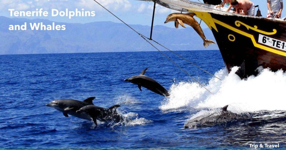 Tenerife Dolphins and Whales, tickets, trips, tours, excursions, cheap, events, reservations, restaurants, hotels, Playa de las Américas, Puerto Colón, Puerto de la Cruz