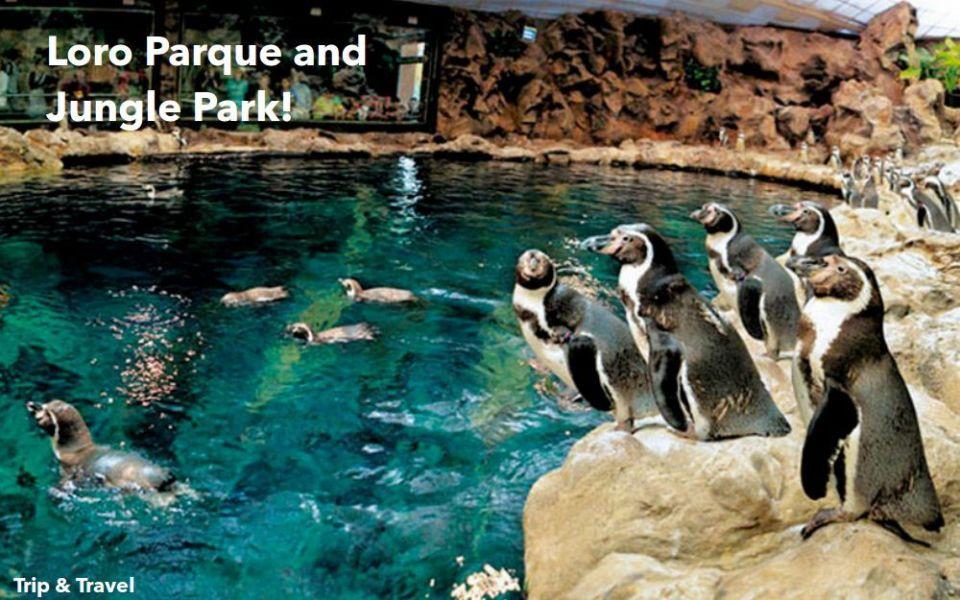 Tenerife Tourist Attractions, tickets, hotels, reservations, restaurants, Canary Islands, Spain, Loro Parque, Siam Park, car renting, Aqualand, Pirámides de Güímar
