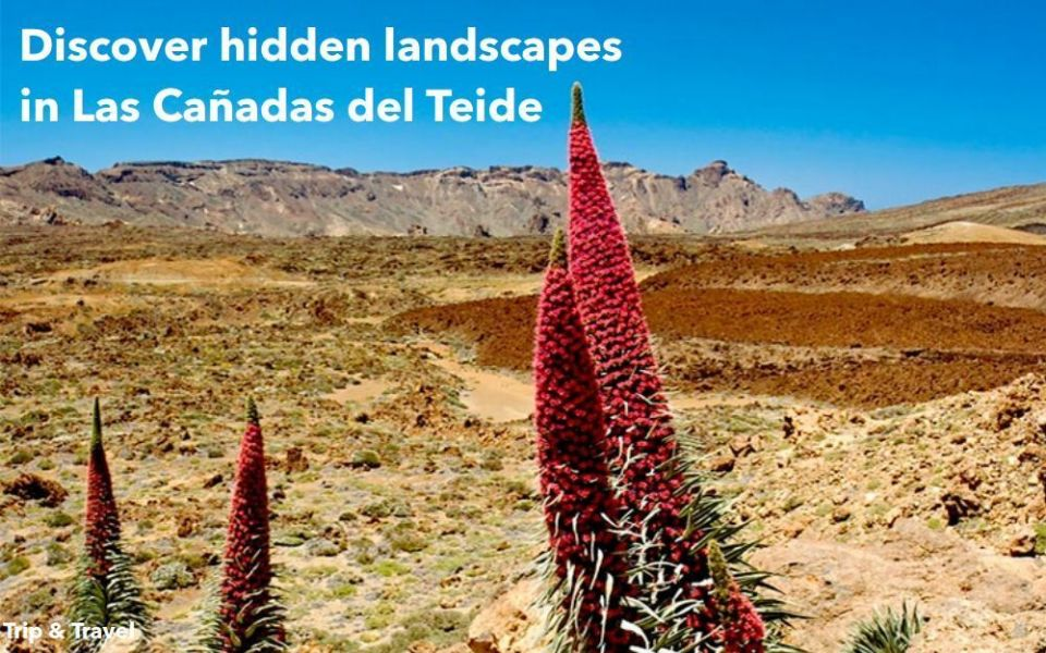 Tenerife Walking Excursions, tickets, hotels, reservations, trekking, mountain Teide, Canary Islands, Spain, bus, jeeps, buggies, quads, car renting, holidays, restaurants