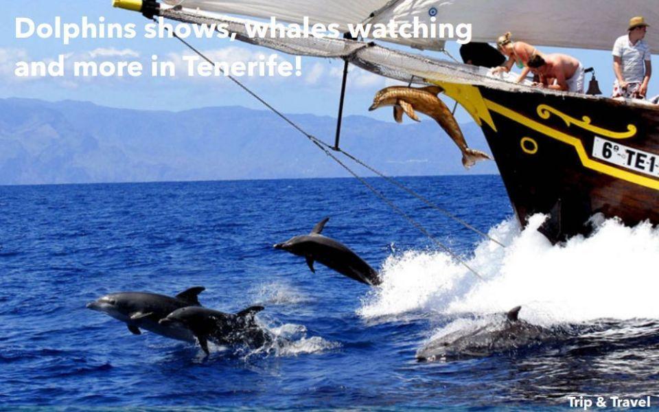 Playa de las Américas Trips, hotels, Tenerife, yachts, catamarans, reservations, restaurants, cheap, tickets, tours, dolphins show, whales watching, parascending