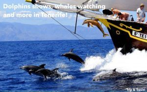 Tenerife Boat Hire, hotels, Playa de las Américas, yachts, catamarans, reservations, restaurants, cheap, tickets, tours, dolphins show, whales watching, parascending