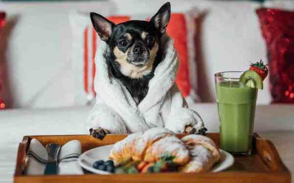 dog critic hotels breakfast