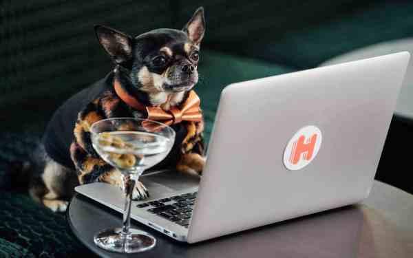 canine critics draw