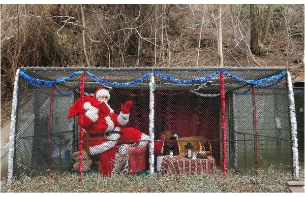 Djed Božićnjak u praškom ZOO (foto: Petr David Josek, AP)