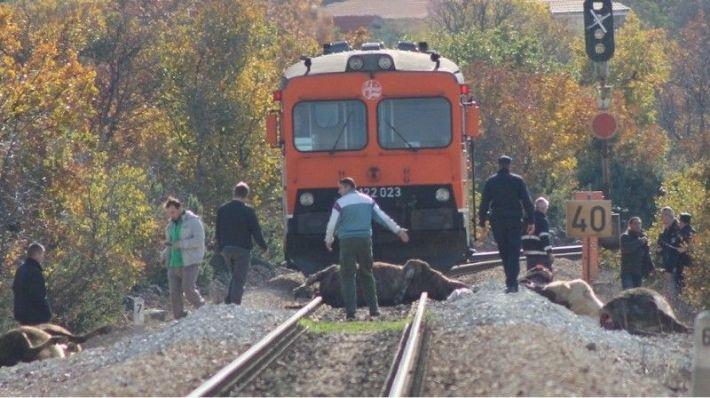 Očevid - kod Žitnića vlak pregazio osam krava