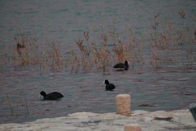 Inicijativa Općine Tisno: Sjedište Parka prirode Vransko jezero seli u Betinu!