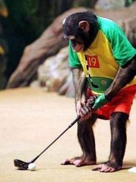 majmun golf