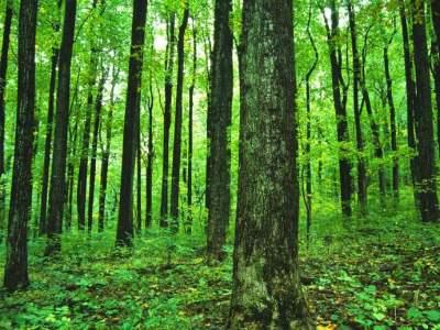 'Posadi stablo' – na zgarištu će se saditi česmina i hrast medunac