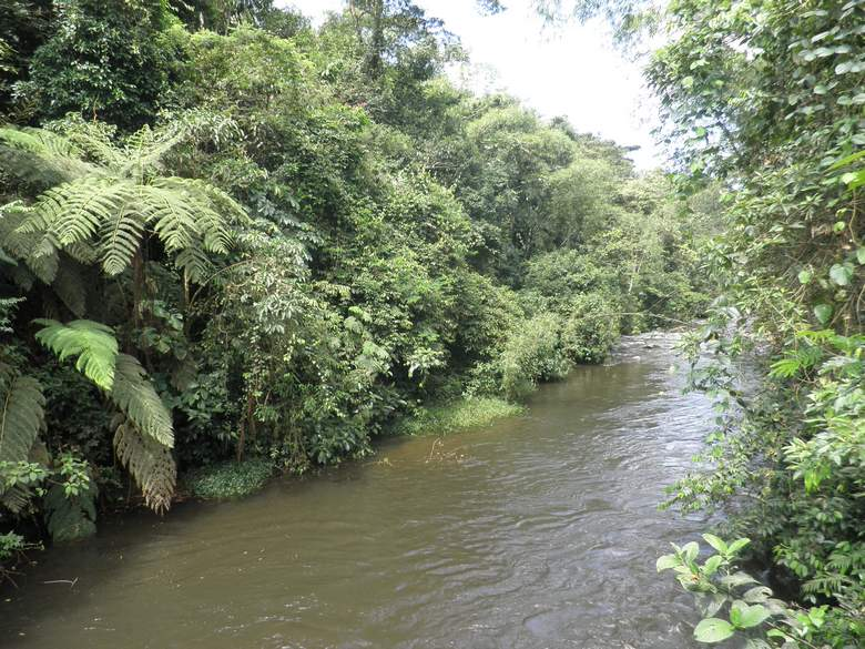 Amazonija, snimila.J.Klisović