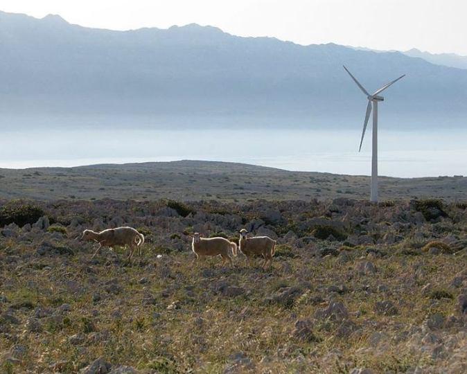 Ovce ne profitiraju od vjetrolektrana (foto Wikipedia)