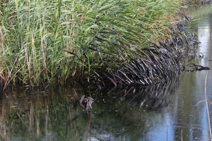 Kiše počistile kninsku lagunu mazuta (Foto H. Pavić) (22)