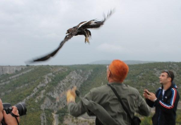 Nakon oporavka i pomnih mladi suri orao pušten je u srijedu na slobodu (Foto Hrvoslav Pavić)