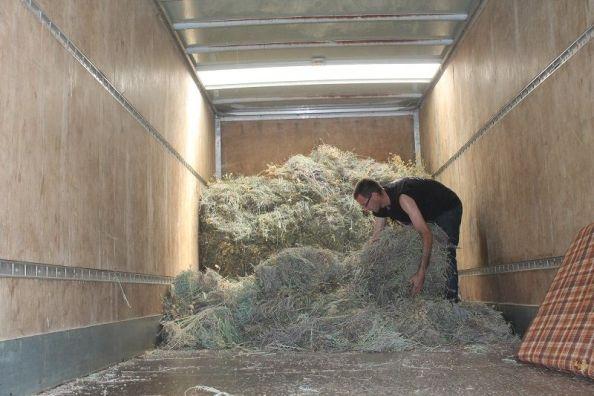 Smilje se mora preraditi unutar 24 sata od branja - kamion otkupljivača u Čenićima (Foto: H. Pavić)