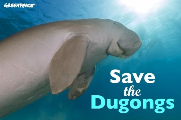 dugong_macros_1