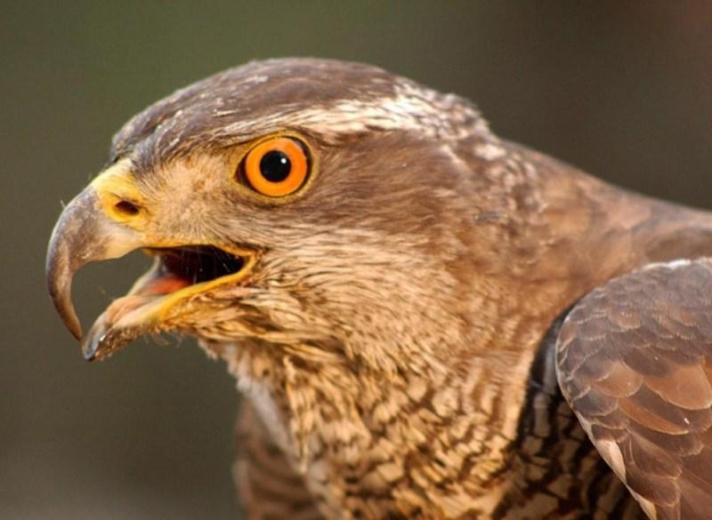 Ptica (foto NP Krka)