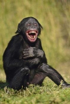 Mali majmuni se smiješe dok spavaju i kod liječnika, a miševi kad ih se škaklje