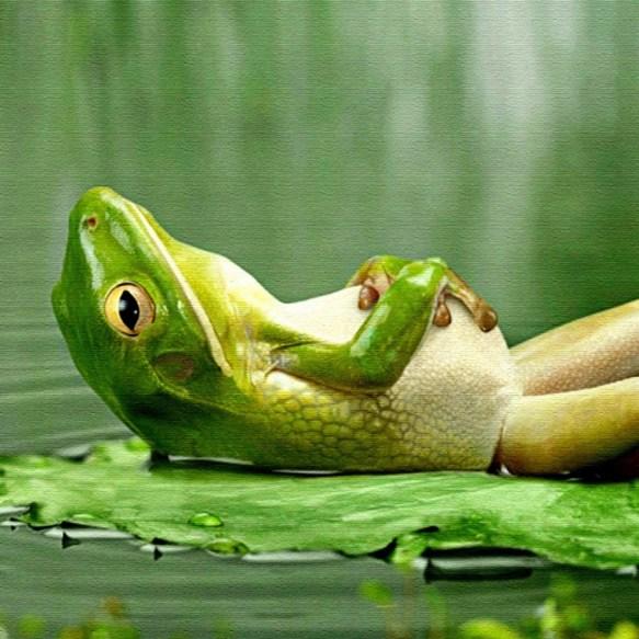Žaba (foto youtube)