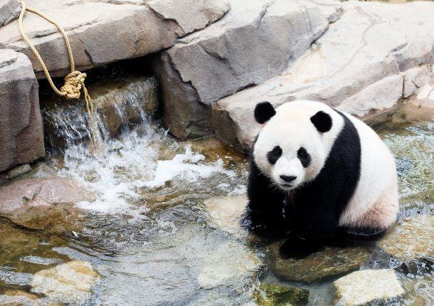 Le Bao dok je bio živ - foto/HINA/ EPA/YONHAP